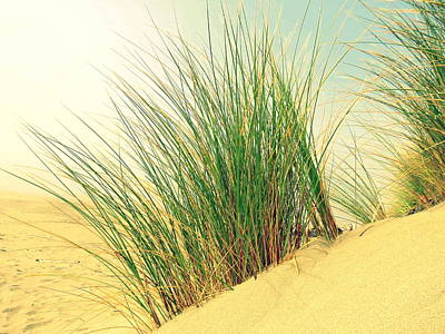 Photograph - Beach Grass by Ramona Johnston