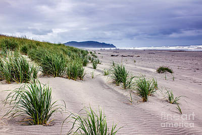 Photograph - Beach Grass by Robert Bales