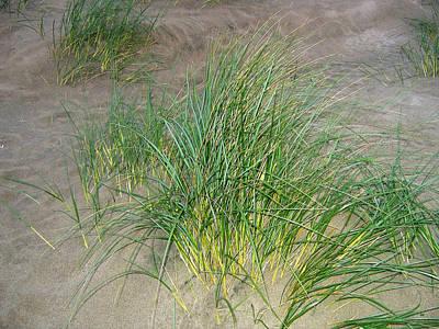 Photograph - Beach Grass by Will Borden
