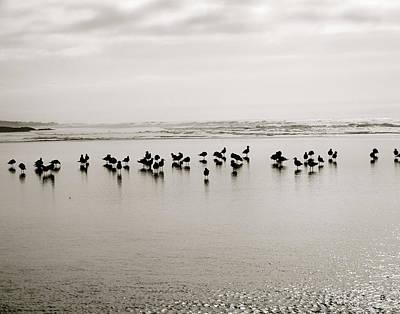 Beach Gulls Gather Original