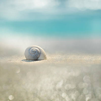 Sea Shell Photograph - Beach House by Laura Fasulo