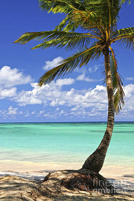 Caribbean Photograph - Beach Of A Tropical Island by Elena Elisseeva