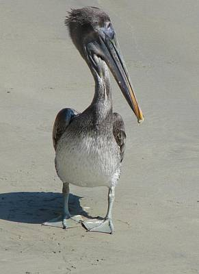 Mellow Yellow - Beach Pelican by Cindy Goshko