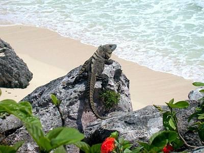 Photograph - Beach Perch by Jane Girardot