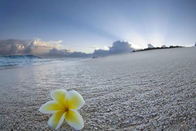 Plumeria Flowers Photograph - Beach Plumeria by Sean Davey