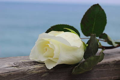 Bloom Photograph - Beach Rose by Cathy Lindsey
