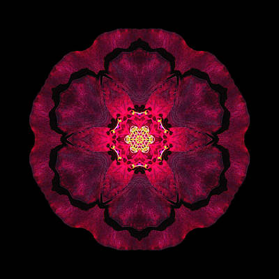 Photograph - Beach Rose II Flower Mandala by David J Bookbinder