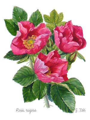 Painting - Beach Roses -  Rosa Rugosa by Janet Zeh