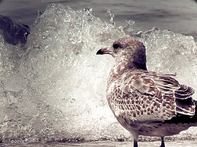 Mixed Media - Beach Seagull by Connie Dye