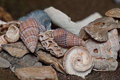 Photograph - Beach Shells 2 by WB Johnston
