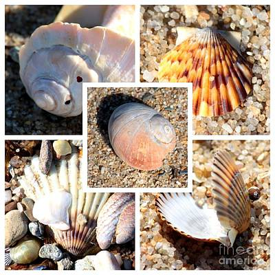 Photograph - Beach Shells Collage by Carol Groenen
