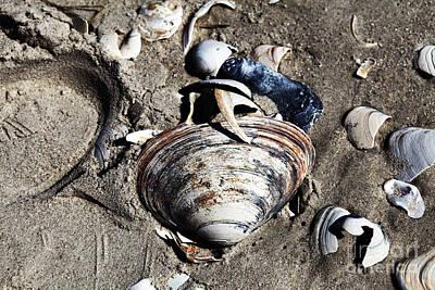 Beach Shells Art Print by John Rizzuto