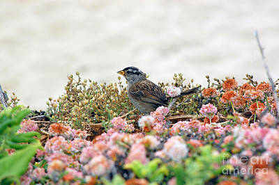 Photograph - Beach Sparrow by Debra Thompson