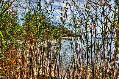 Beach Thru The Tall Grasses Original