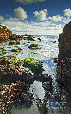 Photograph - Beach Tide Pool And Blue Sky by Jerry Cowart