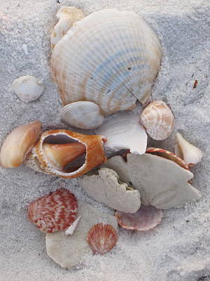 Florida Photograph - Beach Treasures 2 by Megan Cohen