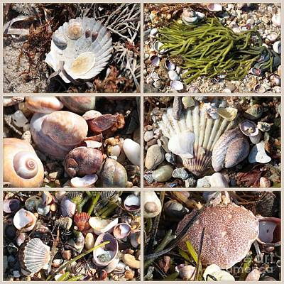 Beach Treasures Art Print by Carol Groenen