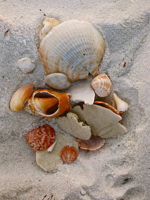 Ocean Photograph - Beach Treasures by Megan Cohen