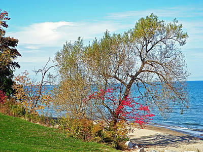 Photograph - Beach Tree by Aimee L Maher ALM GALLERY