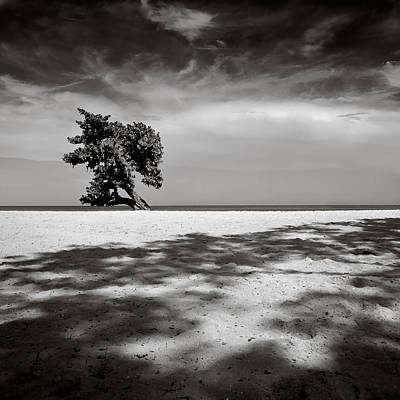 Ideal Photograph - Beach Tree by Dave Bowman