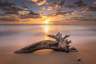 Photograph - Beach Tree Sunrise by Pierre Leclerc Photography