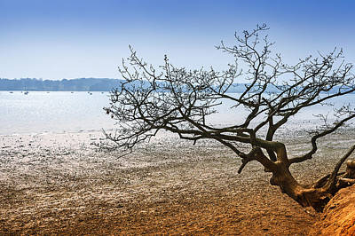 Beach Tree Art Print by Svetlana Sewell