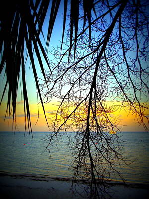 Photograph - Beach View Through The Palms by Sheri McLeroy