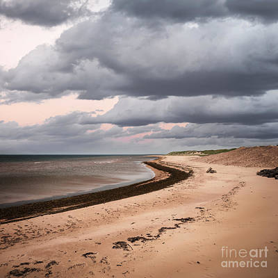 Winter Animals - Beach view with storm clouds by Elena Elisseeva