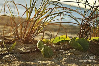 Beach Vine Art Print