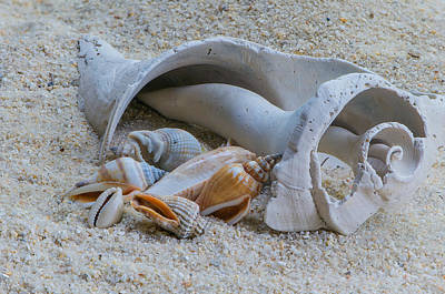 Seashell Photograph - Beach Walk Collection by Randy Walton
