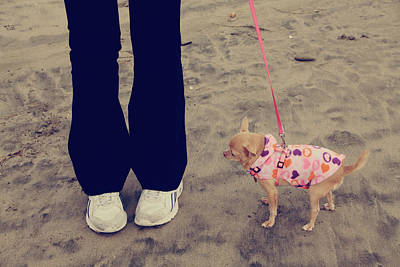 Dog Portrait Photograph - Beach Walk by Laurie Search