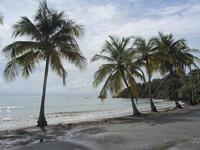 Photograph - Beach With Palm Trees by Anita Burgermeister