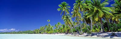 Boras Photograph - Beach With Palm Trees, Bora Bora, Tahiti by Panoramic Images