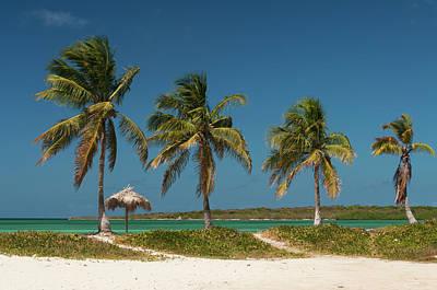 Palapas Wall Art - Photograph - Beach With Palm Trees by John Elk Iii