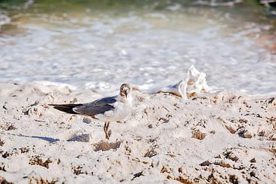 Photograph - Beachcomber by Sennie Pierson