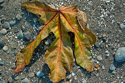 Photograph - Beached Leaf by Tikvah's Hope