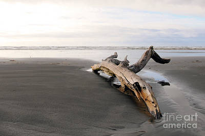 Photograph - Beached Log by Sarah Schroder