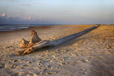 Photograph - Beached Tree Dawn by Alan Raasch