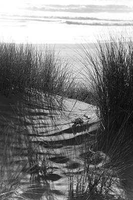 Photograph - Beachgrass by Adria Trail