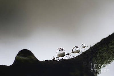 Beads Of Rain With Particles Floating Art Print by Dan Friend