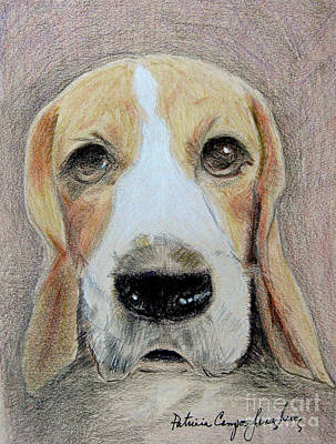 Art Print featuring the drawing Beagle Best In Show by Patricia Januszkiewicz