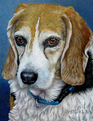 Fuqua - Artwork Drawing - Beagle - Colored Pencil by Beverly Fuqua