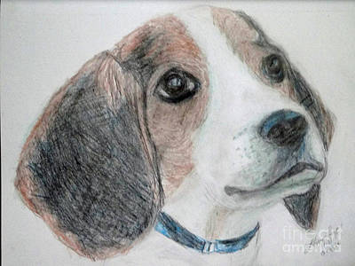 Drawing - Beagle by Lyric Lucas