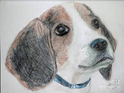 Drawing - Beagle by Lyric Lucas