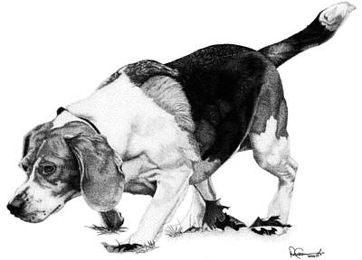 Drawing - Beagle On The Hunt by Rob Christensen