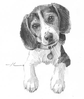 Drawing - Beagle Puppy Pencil Portrait by Mike Theuer