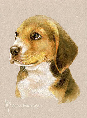Watercolor Pet Portraits Mixed Media - Beagle Puppy Portrait by Victor Powell