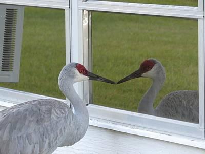 Sandhill Cranes Photograph - Beak To Beak by Zina Stromberg