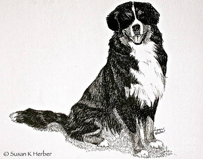 Drawing - Beaming Berner by Susan Herber
