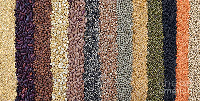 Beans And Pulses Pattern Art Print by Tim Gainey